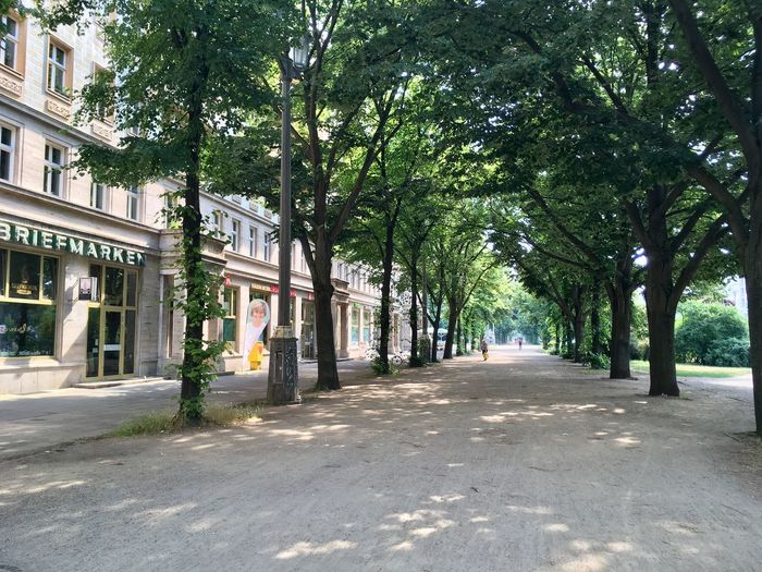 Empty road amidst trees and buildings in city