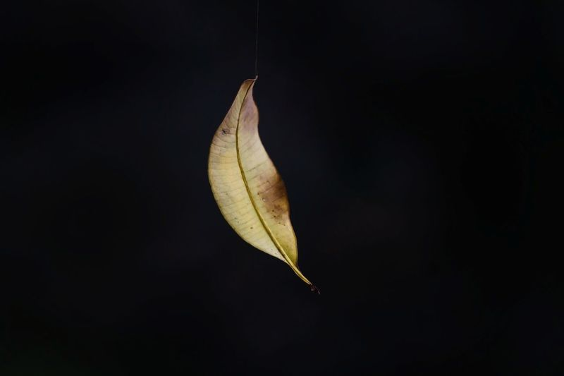 hanging leaf Leaf Hanging Nature Nature_collection Nature_collection India