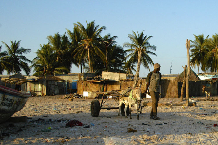 Palmarin Senegal Palmarin West Africa Africa Clear Sky Day Donkey Donkey Cart One Person Outdoors Palm Tree Real People Senegal