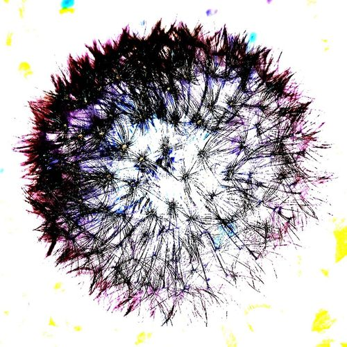 Sow Thistle Abstract Crazy Idea Multi Colored