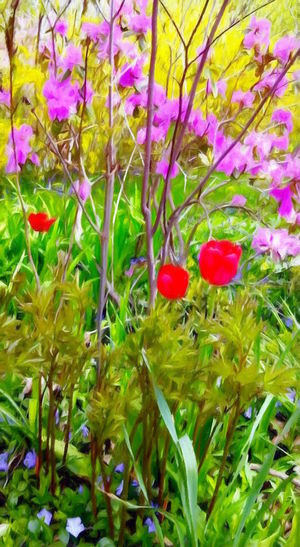 Beauty In Nature Close-up Day Flower Fragility Freshness Growth Leaf Nature No People Outdoors Plant Red Tulips
