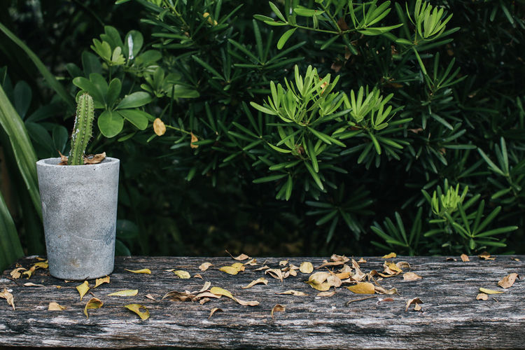 Leaves on potted plant by tree