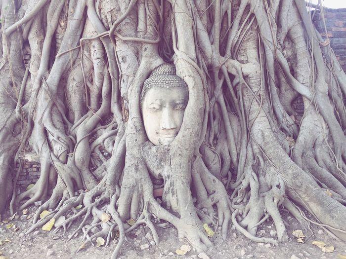 EyeEmNewHere Ayutaya (Tailandia)