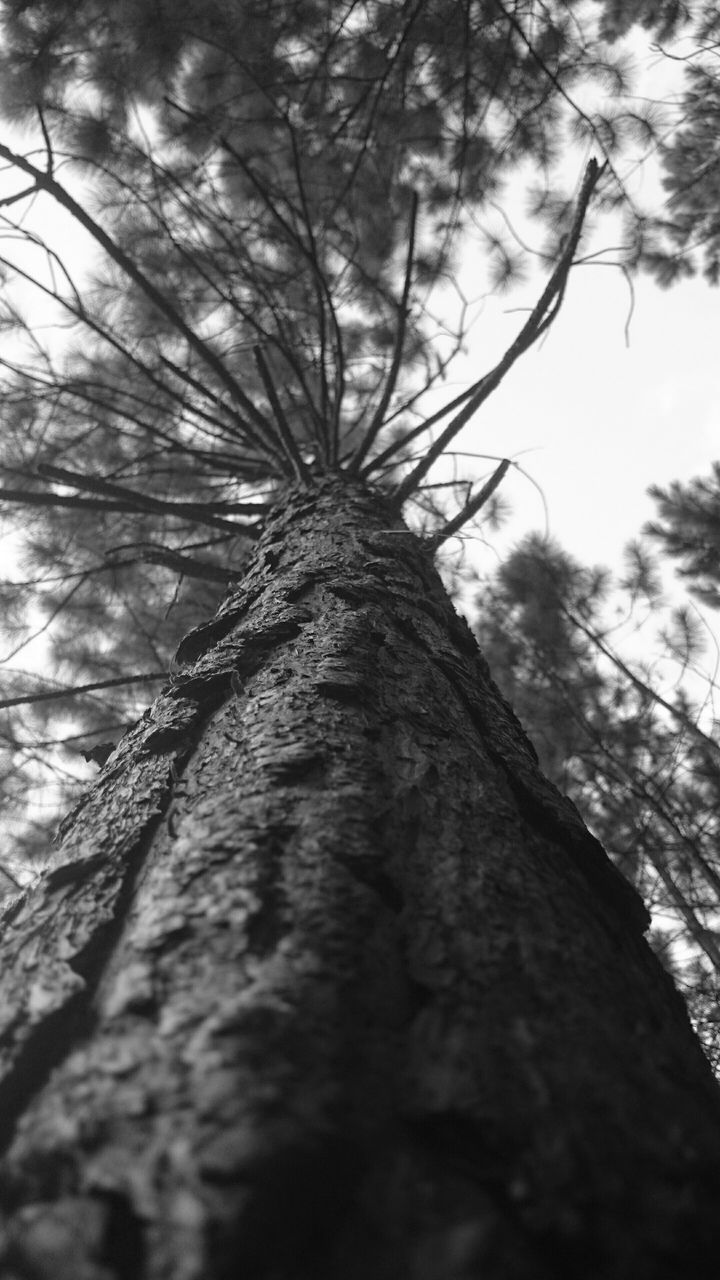 tree, tree trunk, low angle view, nature, growth, no people, day, outdoors, branch, sky, beauty in nature, close-up