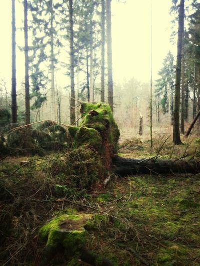 Looks Like Animal Woods Fallen Tree