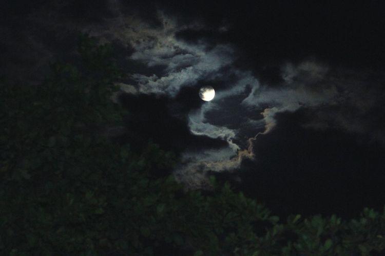 Howling At The Moon Teresina-Pi