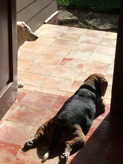 Philippines Antipolo, Rizal Ph Early Morning Sunshine I Love My Dogs It's A Dog's Life The Philippines Dogs Sunbathing Front Door View Pets In Sunshine