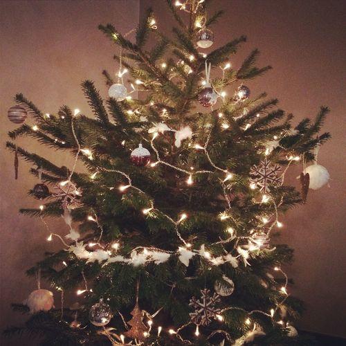 Christmas Tree Christmas Tree ???