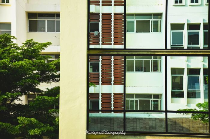 Building Exterior Window Architecture Built Structure No People Day Plant Residential Building Outdoors Window View Building Nature Shadow Eyeemphotography EyeEm Thailand From My Lens EyeEm Gallery EyeEm Best Shots Capture The Moment Shotoftheday City Life Light And Shadow Thailand Tree Streetphotography
