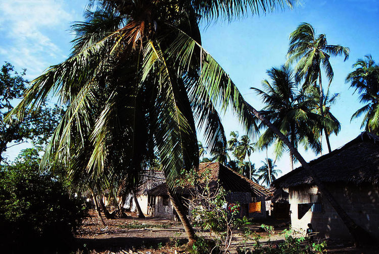 Kenia Africa Holidays Travelling Analog The Traveler - 2019 EyeEm Awards Tree Palm Tree Sky Architecture Building Exterior Thatched Roof Coconut Palm Tree Palm Leaf Tropical Tree Residential Structure Country House Growing Agricultural Field Date Palm Tree