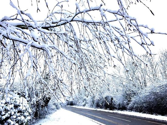 Trees covered with Snow in Northamptonshire Snow Trees Tree Road Weather The Weather Channel Northampton Northamptonshire Northants Uk United Kingdom