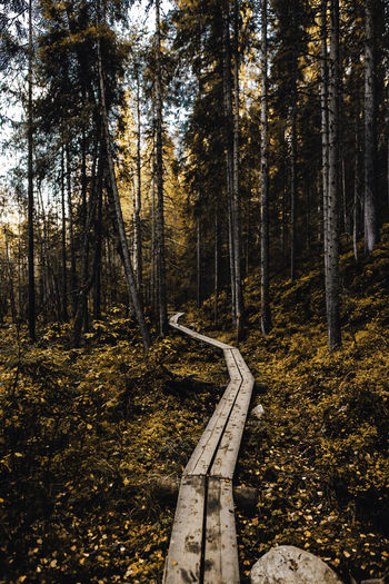 EyeEm Nature Lover Autumn Beauty In Nature Change Day Environment Forest Land Landscape Nature No People Non-urban Scene Outdoors Pine Tree Plant Road Scenics - Nature Tranquil Scene Tranquility Tree Tree Trunk Trunk WoodLand