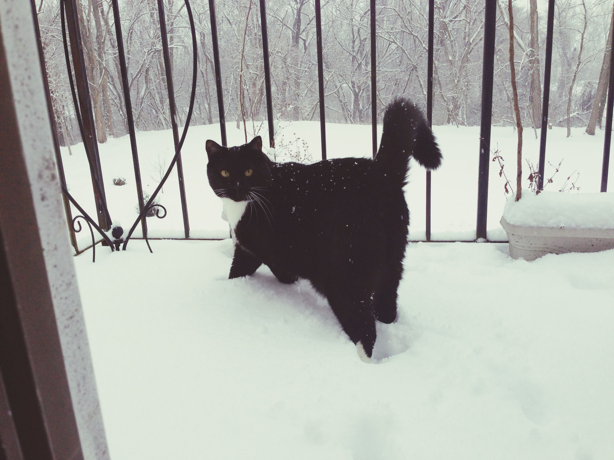 pets, domestic animals, snow, animal themes, winter, one animal, cold temperature, mammal, season, domestic cat, black color, cat, dog, weather, sitting, full length, silhouette, indoors, feline, covering