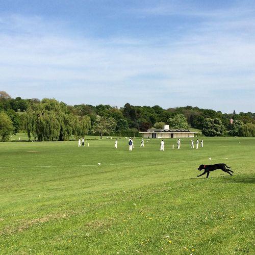 Cricket match at the park. Dog London Barnet IPSNoFilter