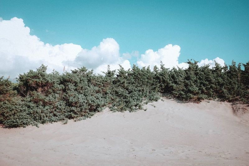 Day Nature Plant Sky Growth No People Outdoors Land Tranquility Cloud - Sky Sand Beach