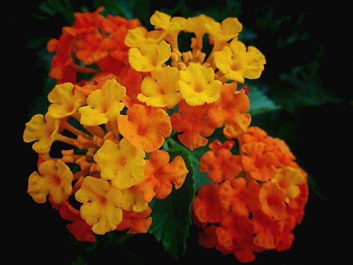 Flowers Nature Showcase: February Macro Beauty Capture The Moment Skwrt Widn SonyQX10 DuaEnamKosongLima