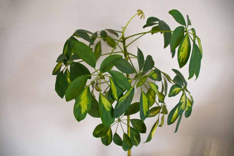 Close-up of green leaves on plant against wall