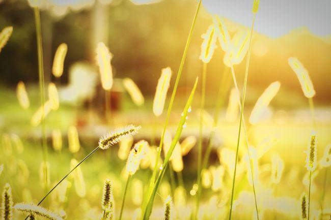 Like the start of something fine. Morning Poets Of The Fall Sunrise Sunshine Sunlight Colors Dawn India Storiesofindia Dew Dew Drops EyeEm Gallery EyeEm Nature Lover Nature EyeEm Best Shots EyeEm Best Edits EyeEmBestPics EyeEm Best Shots - Nature EyeEm Macro Bokeh Nikon Nikonphotography NIKON D5300 Streetphotography