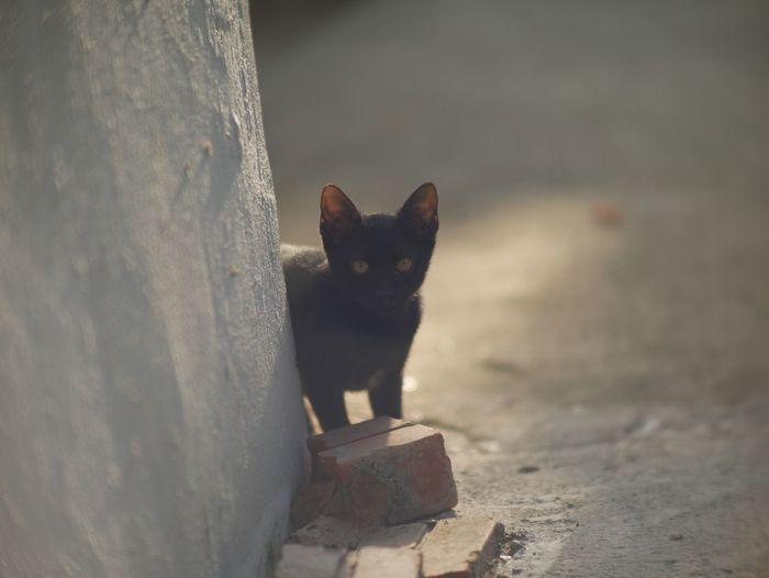 Just little cat