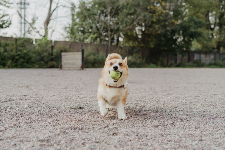 Dog walk, lifestyle One Animal Dog Canine Domestic Pets Mammal Animal Themes Domestic Animals Animal No People Day Portrait Plant Tree Vertebrate Full Length Nature Looking At Camera Ball Outdoors