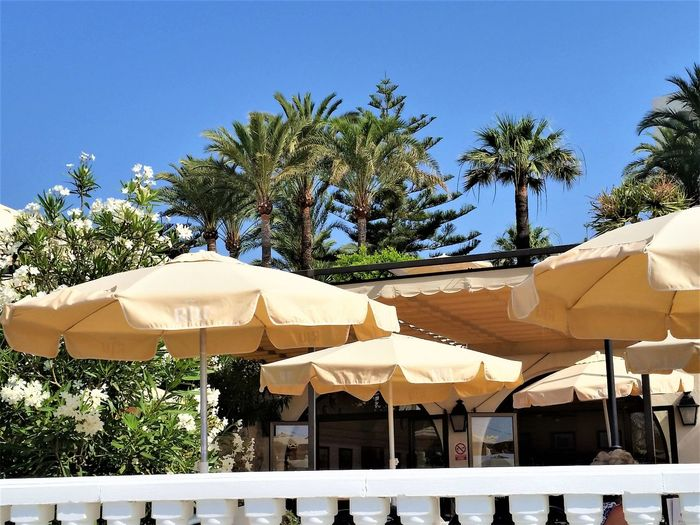 Calmness Nerja Andalucia Parasols Beauty Blue Blue Sky Day Growth Nature No People Outdoors Palm Tree Paradise Plant Sky Tree Tropical Climate Yellow