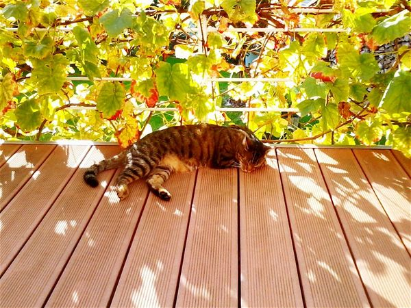 Relaxing Check This Out Grapes 🍇 Cats 🐱 Cat Lovers Love ♥ Lovecats Summertime Places I Love Germany Things I Like Taking Photos EyeEm Best Shots EyeEm Animal Lover