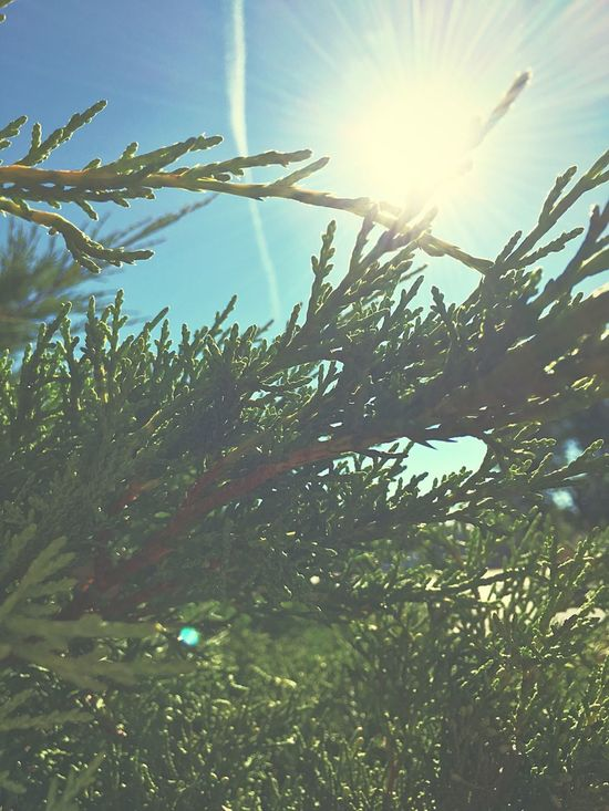 Sun Sunbeam Growth Sunlight Plant Nature Sunny Close-up Beauty In Nature Blue Lens Flare Scenics Bright Tranquil Scene Green Color Tranquility Green Day Sky Fragility