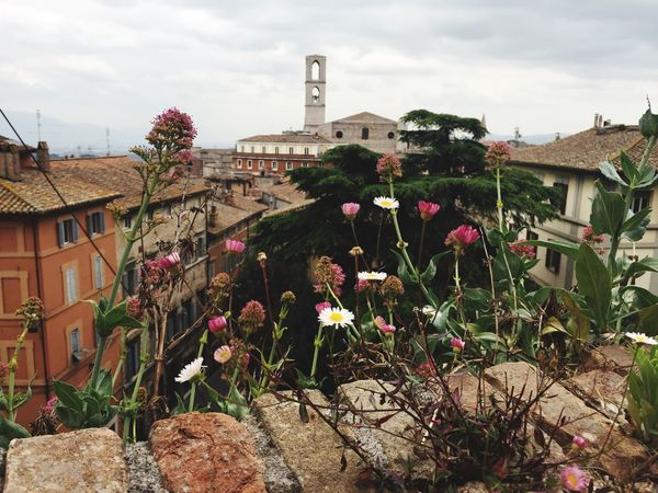 Perugia Italy Storic Center Bloom Sky Plant Residential Building Still Travelling