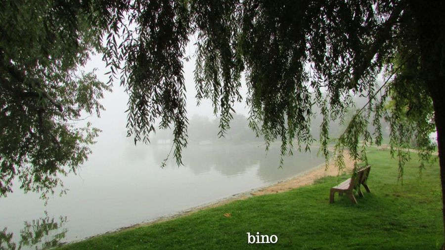 Foggy Morning End Of Summer Around The Lake Still Green! Under The Willow Cool Captures Distant Reflection Lake Cadillac Pure Michigan