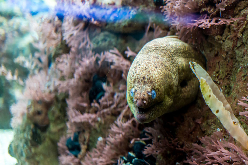 Animal Themes Animal Wildlife Animals In The Wild Aquarium Beauty In Nature Close-up Coral Day Fish Nature No People One Animal Outdoors Sea Sea Life Swimming UnderSea Underwater Water