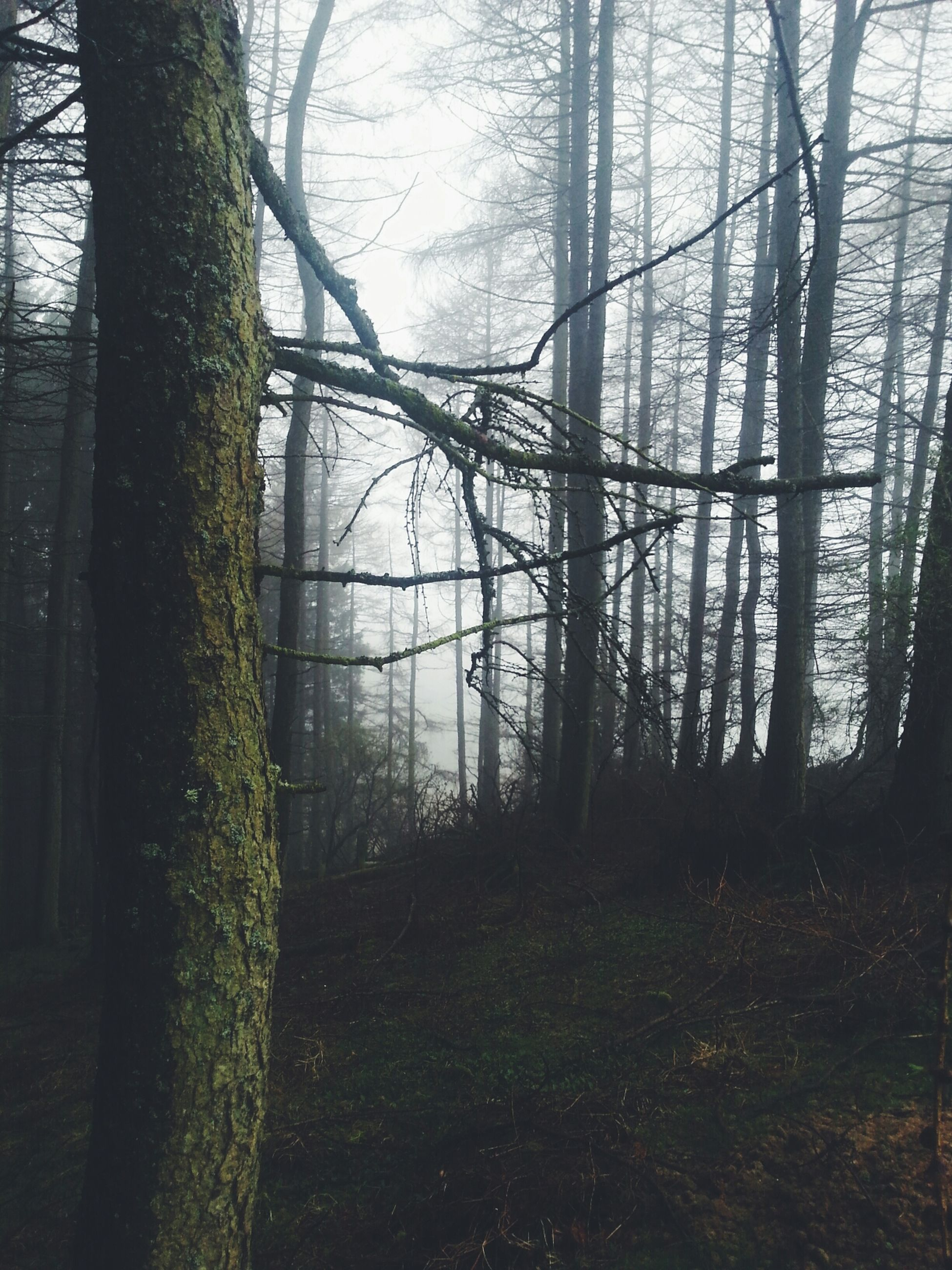 tree, tree trunk, tranquility, branch, bare tree, tranquil scene, forest, nature, growth, beauty in nature, scenics, woodland, landscape, non-urban scene, sky, outdoors, day, no people, field, idyllic