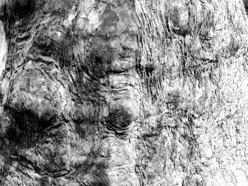 Parma Cittadella Blackandwhite Blackandwhite Photography Walking Around Tree