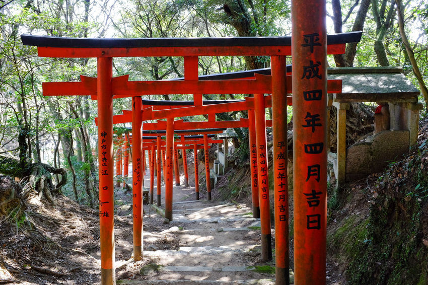 On a remote mountain side, a path of iconic red torii gates mark the approach to the main shrine. As is common in Japan, this mountain is revered as a God. ASIA Ancient Approach Asian Culture Japan Japanese  Nature Path Red Rustic Shrine Shrine Of Japan TORII Arches Culture Culture And Tradition Forest Inscription Pilgrimage Religion Religious Architecture Shinto Temple Traditional Wood - Material