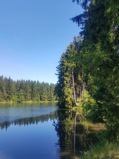A smal lake in Clausthal-Zellerfeld Tree Reflection Outdoors Nature No People Sky Water Day Scenics Beauty In Nature Harz Harz Bilder Beauty In Nature Plant Nature Sunlight Forest Tree Landscape