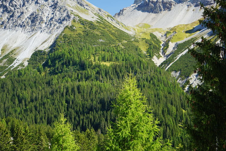 Scenic view of pine trees on snowcapped mountains