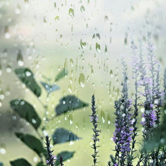 Photo Photooftheday Drops Rain Dubleexposure Relaxing Flowers