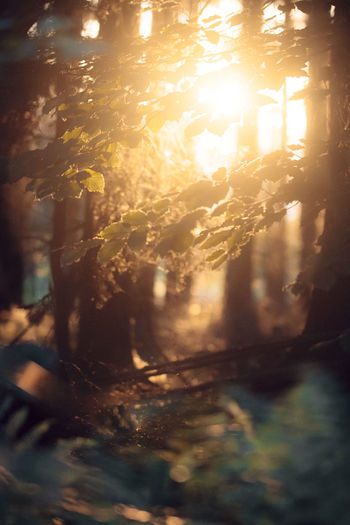 Evening Light Melancholic Summer Views Summertime Close-up Evening Glow Evening Sun Forest Forest Photography Forest Trees Nature Outdoors Summer Vibes Summer ☀ Sundown Sundown, Nightfall, Close Of Day, Twilight, Dusk, Evening Sunlight Sunset Tranquil Scene Warmth Warmthandsunshine
