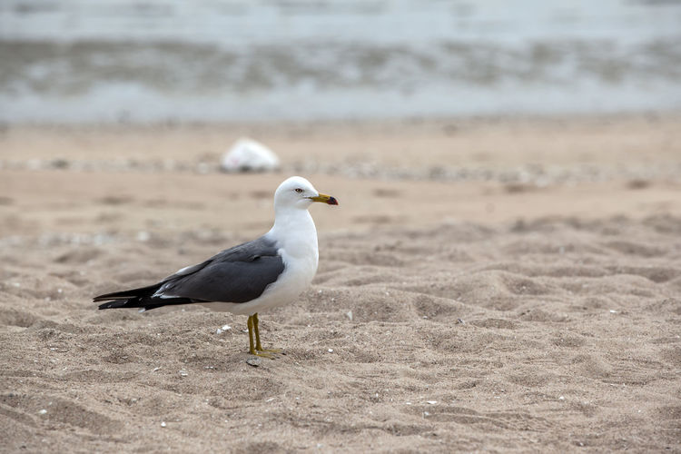 High Angle View Of Seagull On Sand At Beach