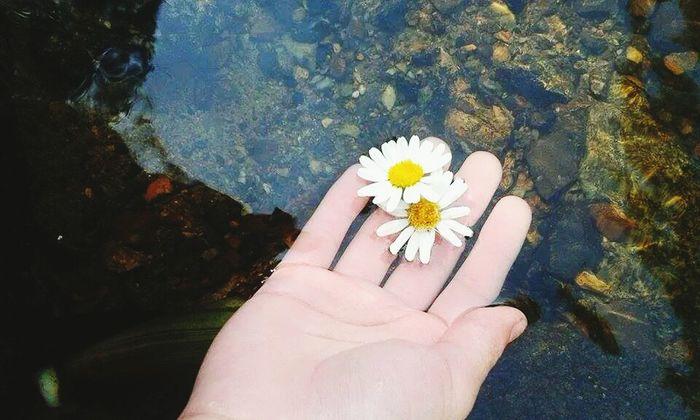 Flowers Pale
