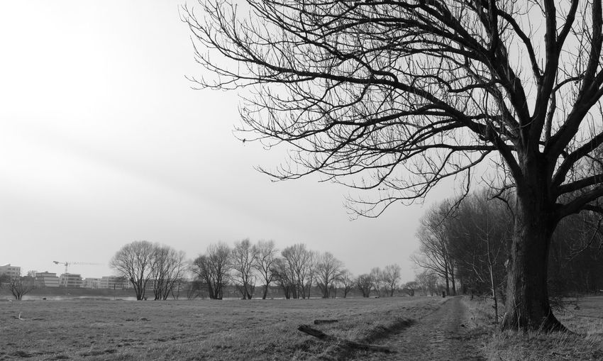 Noir Et Blanc Bare Tree Beauty In Nature Blackandwhite Branch Clear Sky Day Field Landscape Meadow Nature No People Old Track Old Tracks Outdoors Scenics Schwarzweiß Sky Tranquil Scene Tranquility Tree Winter Meadow Winter Tree