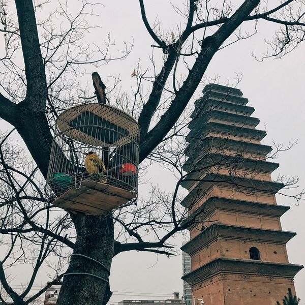 Low Angle View Tree Bird Bare Tree Branch Outdoors No People Sky Clear Sky Built Structure Statue Sculpture Day Animal Themes Architecture Nature Perching Building Acient Tower
