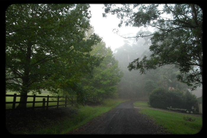 Misty Moisty Morning