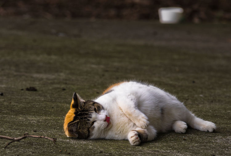 a cat Cat Curiosity Cute Cat Mammal One Animal Relaxation Relaxing Wildlife