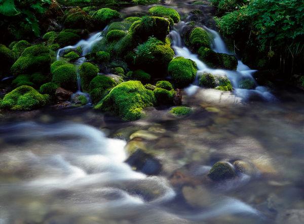 Beauty In Nature Day Dolina Kościeliska Dolina Kościeliska Kościeliska Kościeliska Moss Mountain Mountain River Mountain Stream Mountains Nature No People Outdoors River Stone Stream Tatry Valley Water