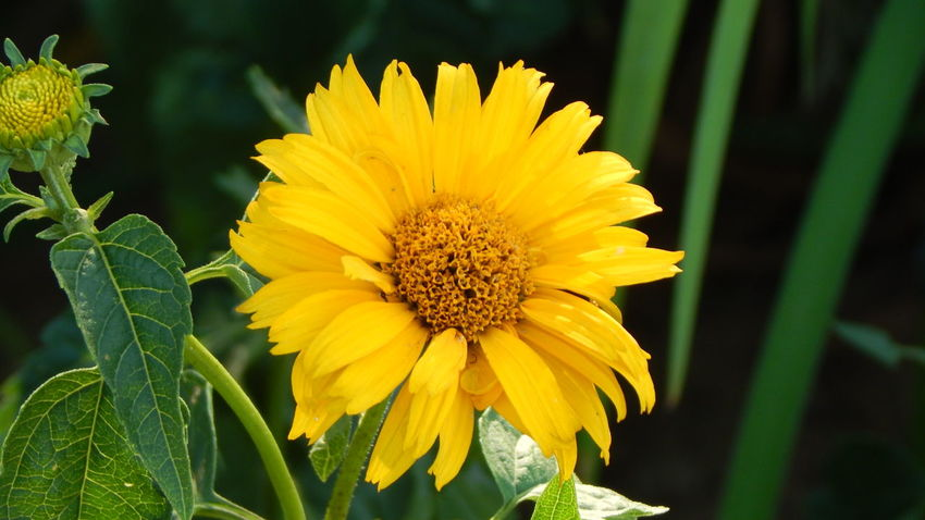Beauty In Nature Close-up Flower Flower Head Freshness Nature Plant Pollen Yellow