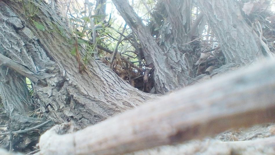 EyeEmNewHere Moorpark Wood - Material Close-up Tree Southern California