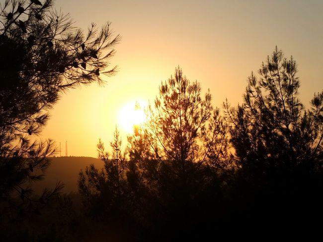 Taking Photos Relaxing Hello World Nature Sun Yellow Open Edit EyeEm EyeEm Best Shots Trees