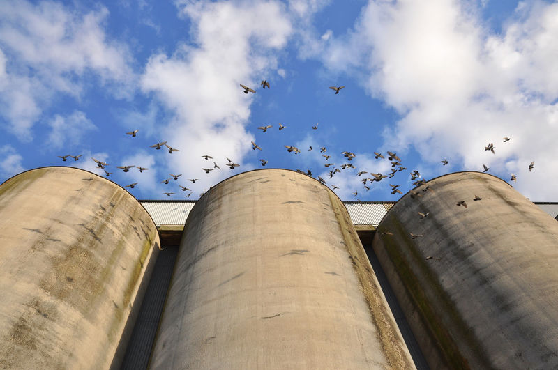 Low Angle View Of Flock Of Birds Flying At Silo