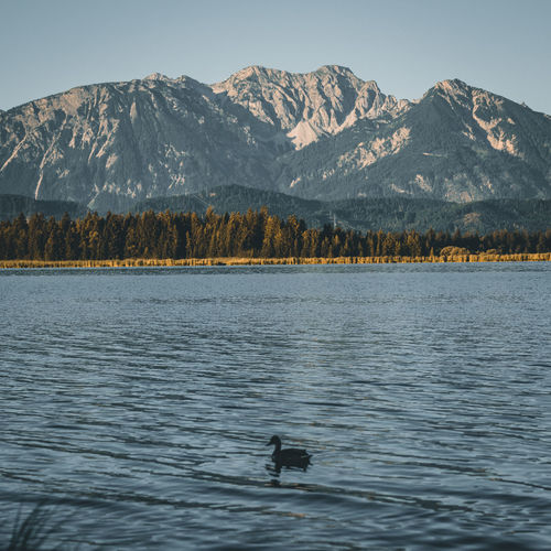 Bird swimming in lake by mountains