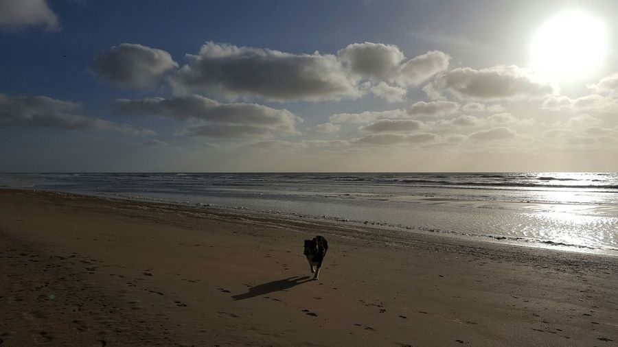 No Filters Or Effects Dogslife First Time At The Beach Sea And Sky OpenEdit Clouds And Sky Sunset Cold Sunny Day